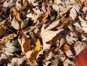 Compost_Brun