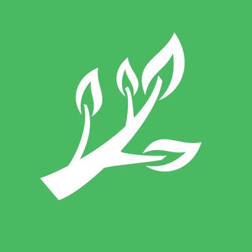Bois et branches