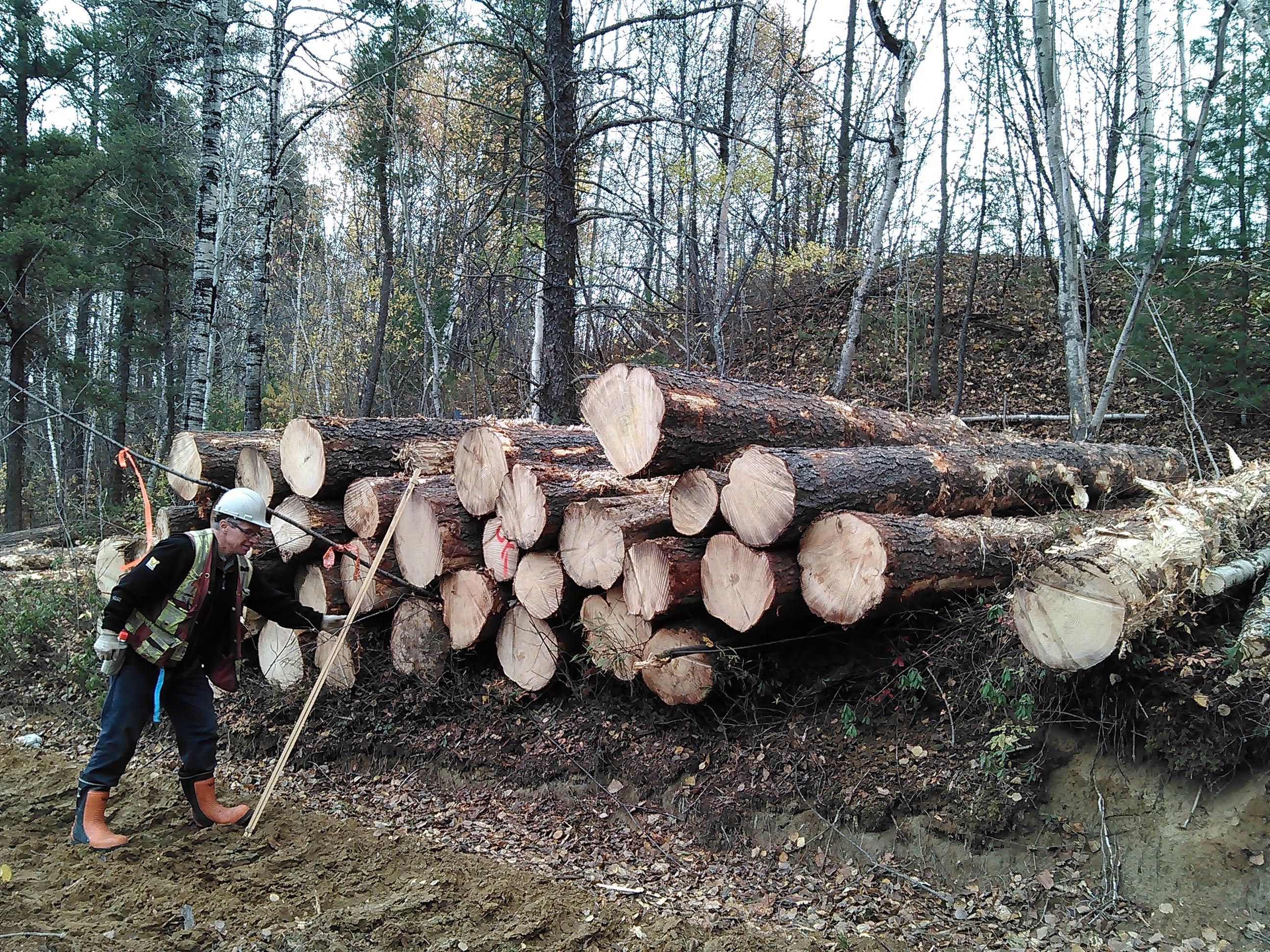 Bilan des travaux forestiers